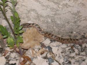 serpent_3