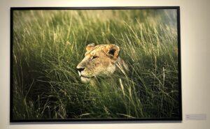 exposition Yann Arthus Bertrand